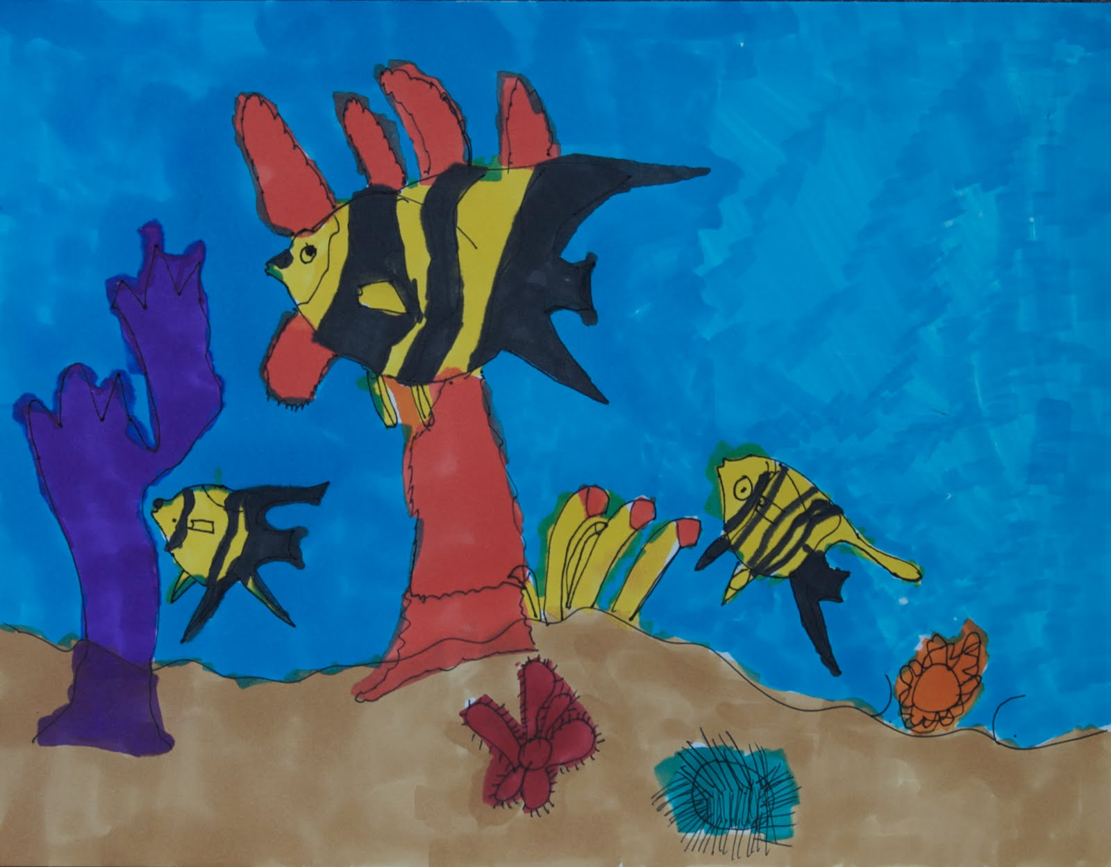 Coral reef pictures for kids