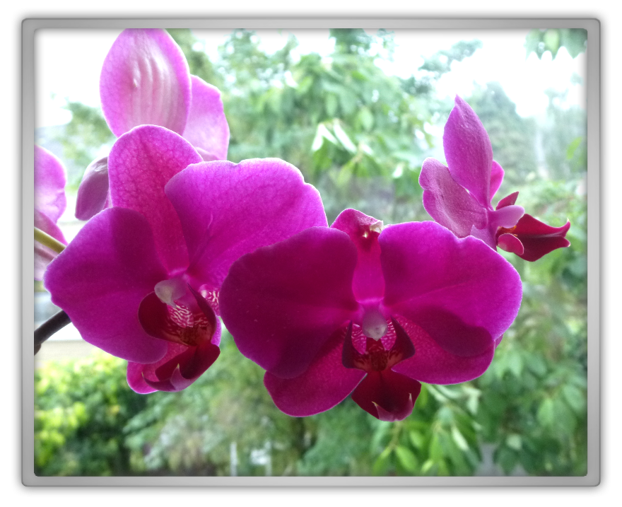 beautiful orchid revived revive purple pink plant nature