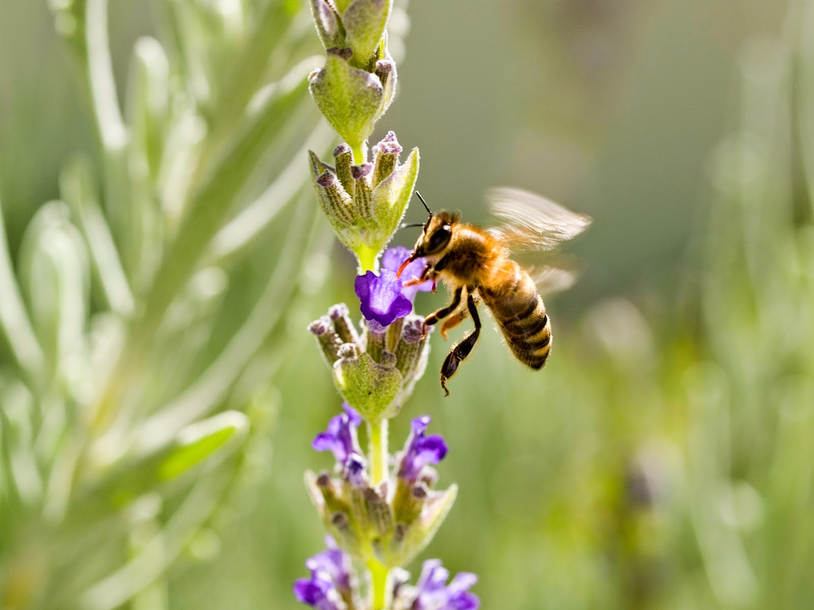 Change the world by protecting honey bees.