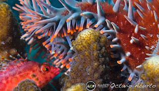 Arte Bajo Agua Peces y Oros Animales