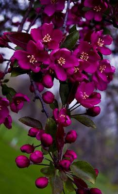 BANCO DE IMAGENES: 60 fotografías de las flores más hermosas del mundo