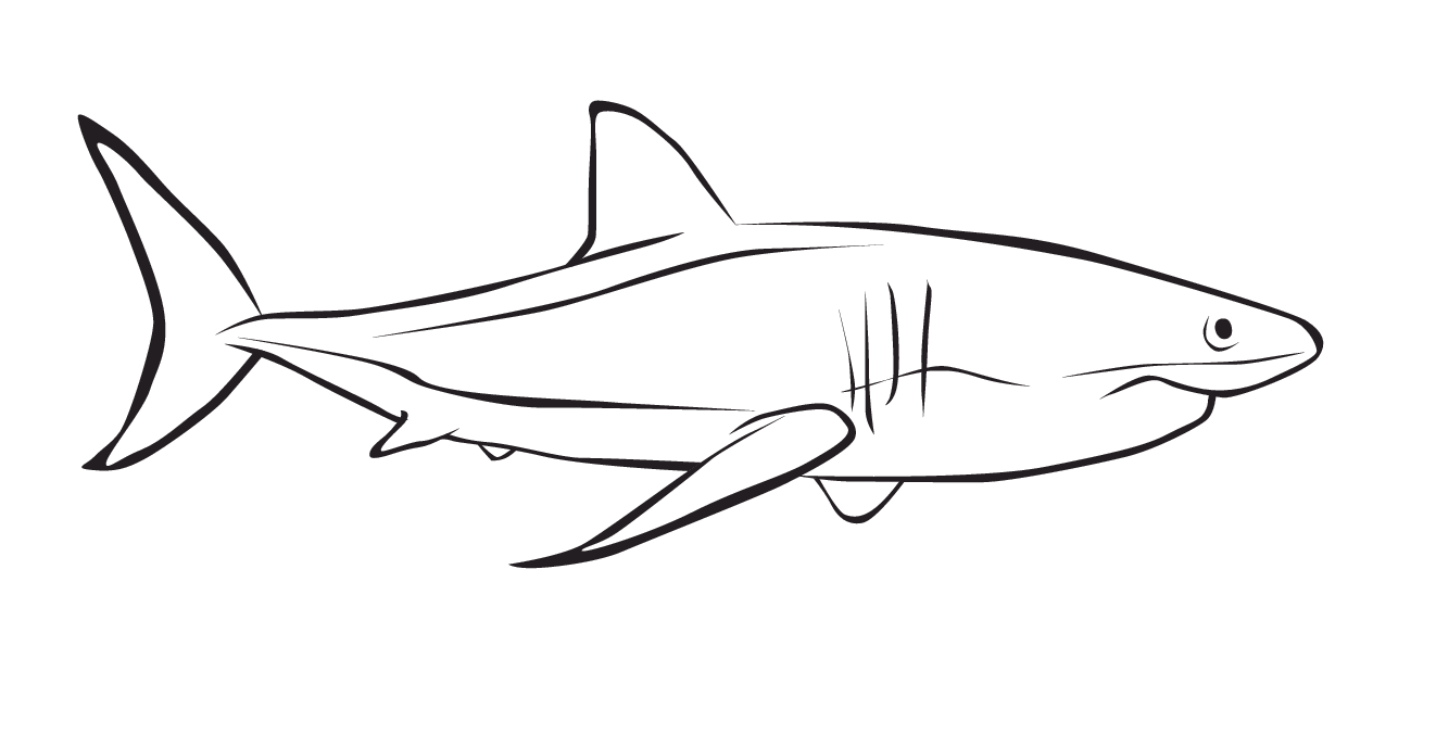 Como dibujar un tiburon blanco - Imagui