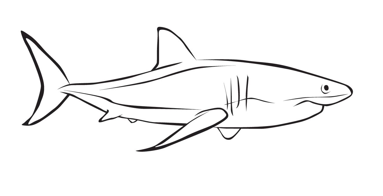 Dibujos Para Colorear Tiburones. Beautiful Descargar Imgenes Grandes ...
