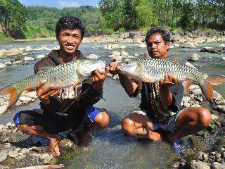 Sungai Progo Magelang:  COUPLE MONSTER HAMPALA MAGELANG