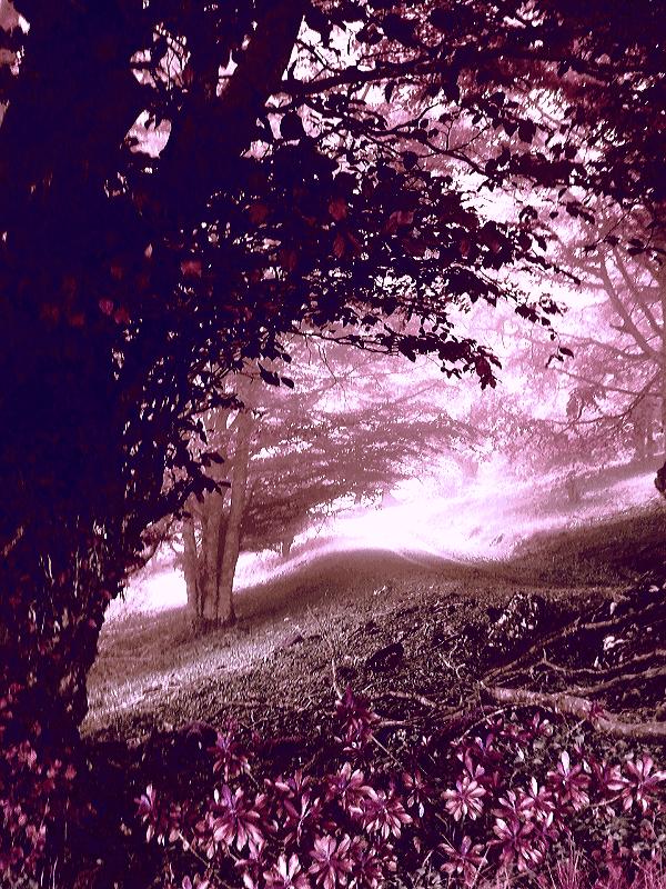 Envuelta en el pelaje de la comisura de los labios de estos caminos, donde se esconden los besos de mi ser