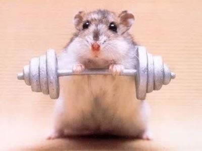 The hamster weightlifter