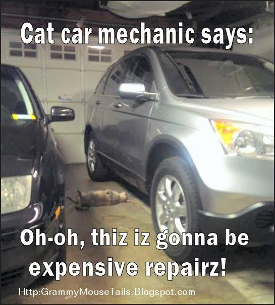 cat car mechanic works for cat treats funny photo image