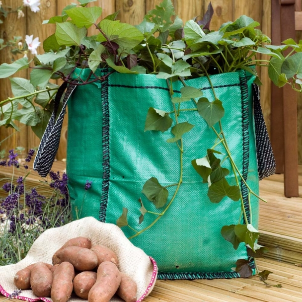 youtube how to grow potatoes in bags