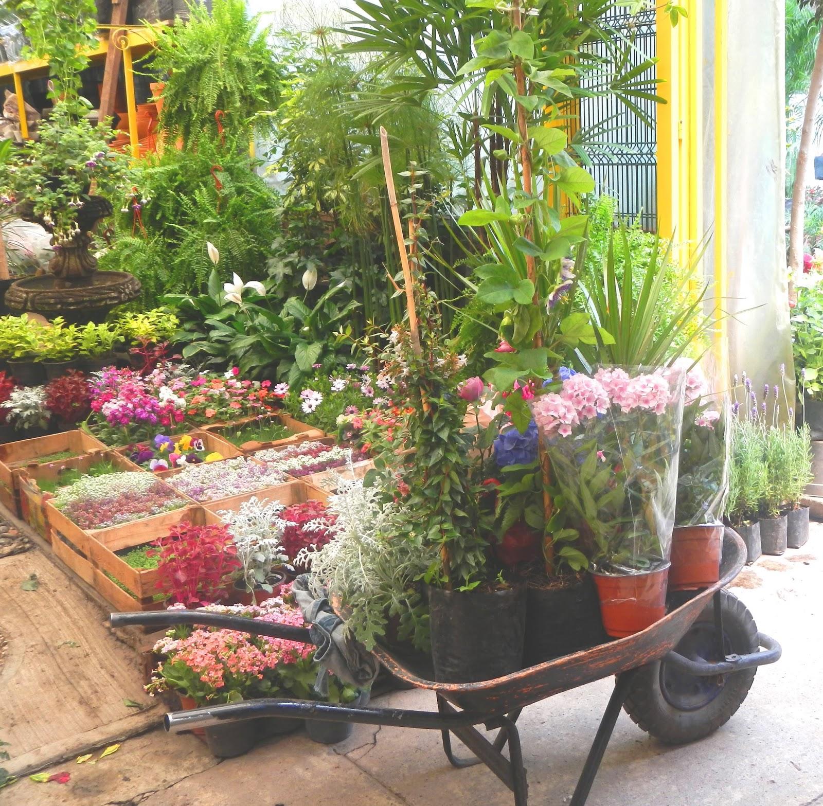 Mercado de plantas viveros de coyoac n heriberto el conejo for Plantas para viveros