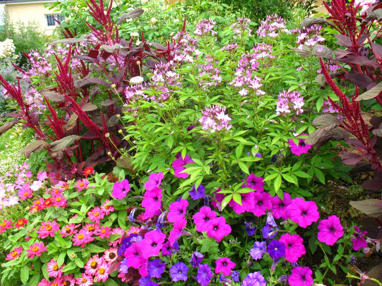 Roses Du Jardin Ch Neland Festival De Fleurs D 39 T