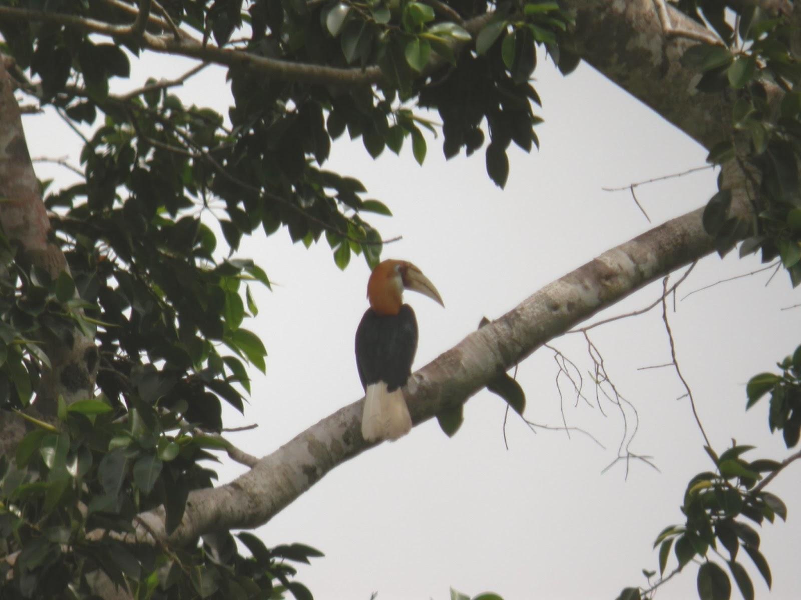 birding never sleeps: June 2004