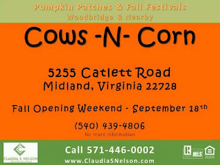 Pumpkin Patches near Woodbridge Virginia 2015, Cows N Corn Midland