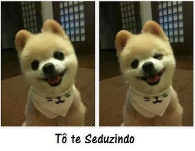 Imagens fofas de cães para postar no Facebook