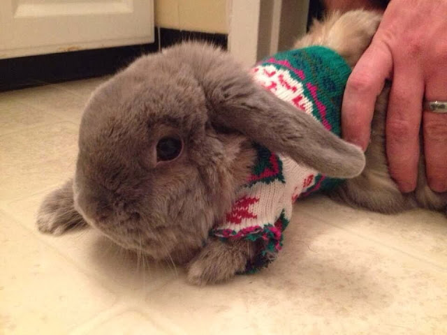Funny animals of the week - 3 January 2014 (40 pics), bunny wears sweater