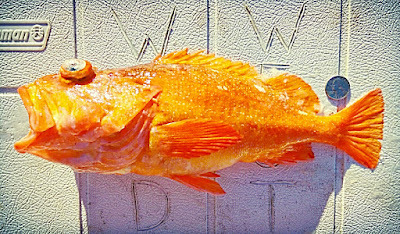galaxy fish, Orange Rockfish, local seafood San Diego