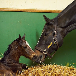 It's A Filly, by War Front!