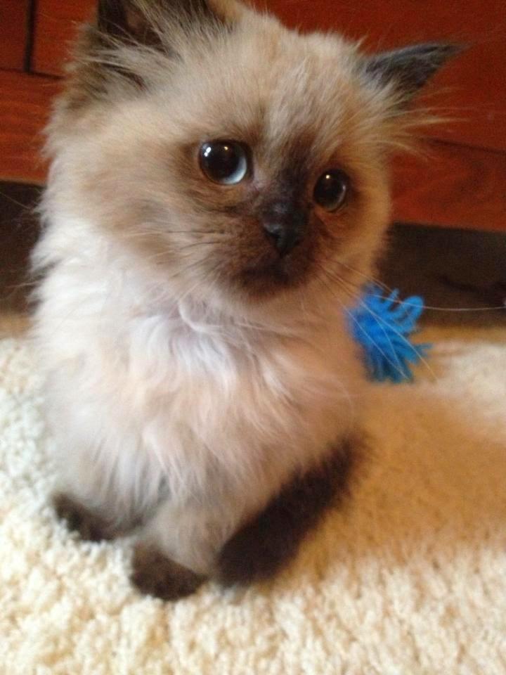 http://1.bp.blogspot.com/-l1Qxp7uKPAs/U5iak3HVLdI/AAAAAAAA-Zw/iaPzgSq-aUQ/s1600/funny-cats-106-008.jpg