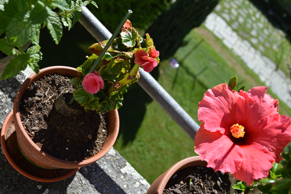 more pretty flowers