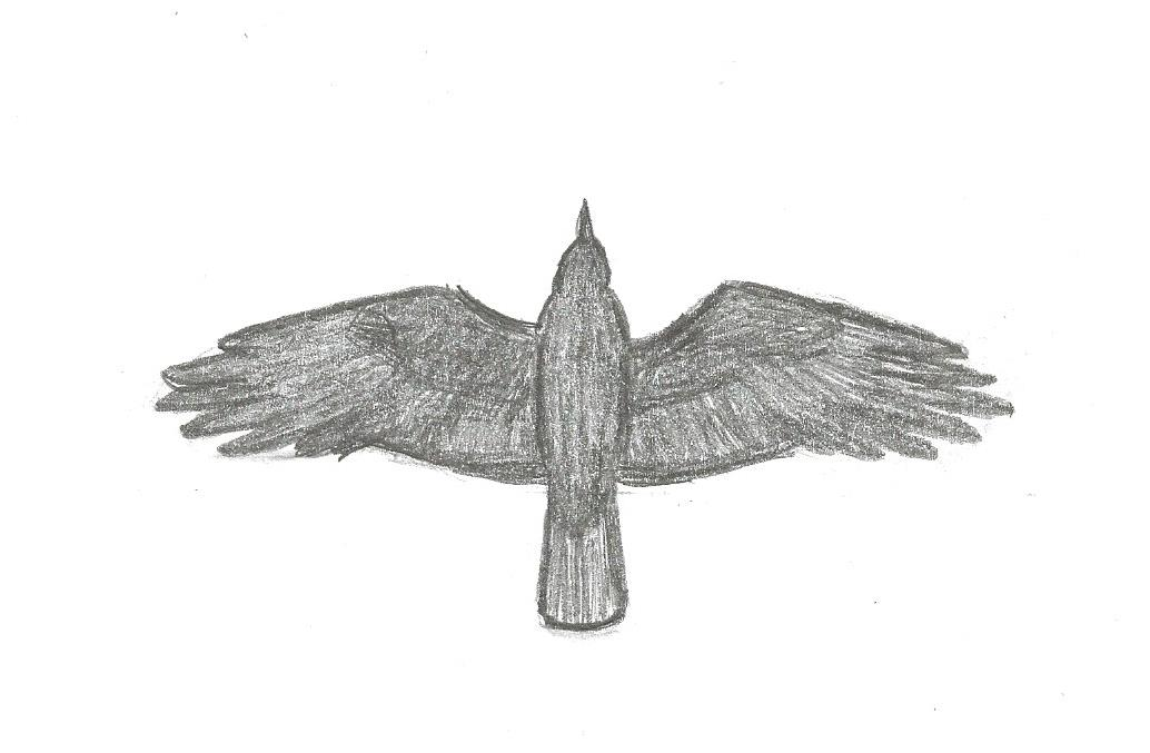 figure 24 flight shape of american crow