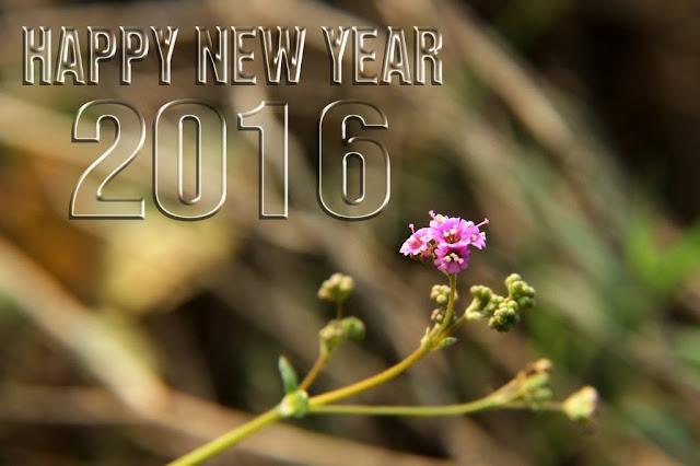 new year clip art 2016
