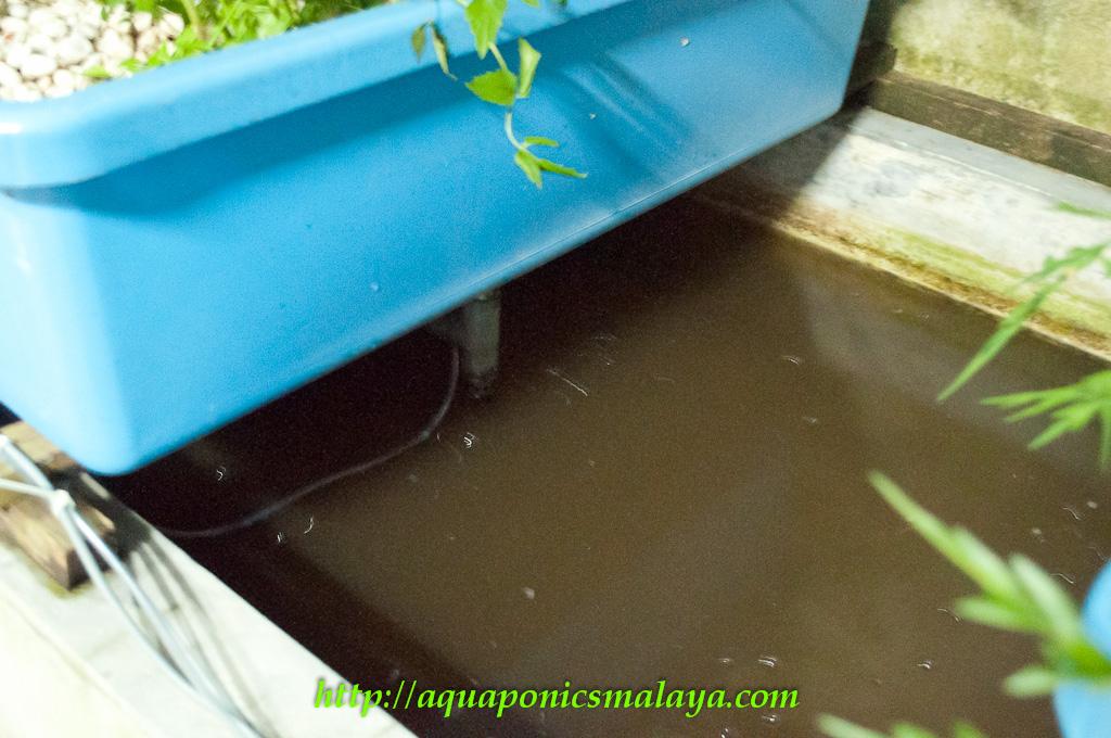 Affnan 39 s aquaponics monster pump for Aquaponics aeration