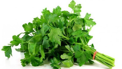 Benefits of parsley for health and beauty
