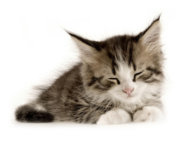 cute Cats and Kittens Pictures and Wallpapers
