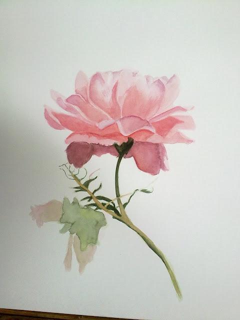 rosa,petalos,acuarela