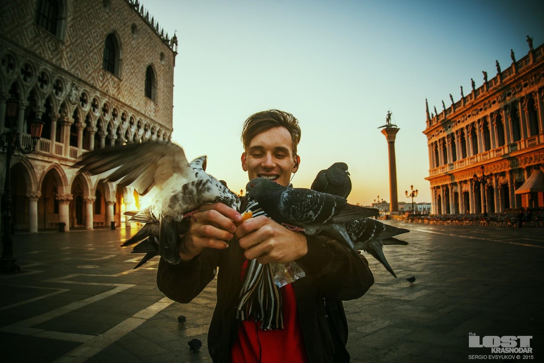 Птицы в Венеции
