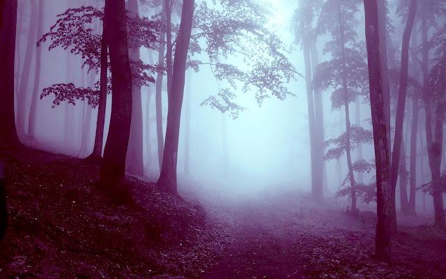 Beautiful Foggy Forest HD Wallpaper