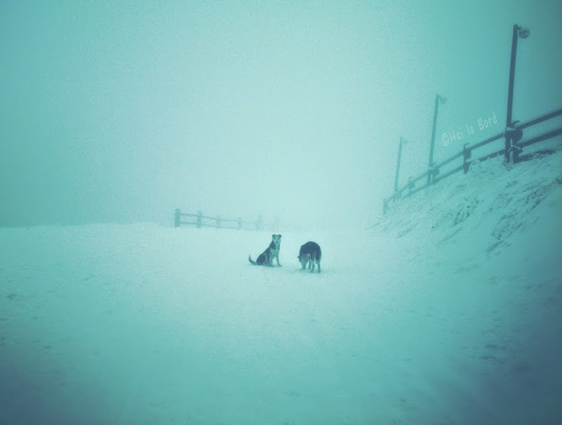 caini in ceata munte cozla