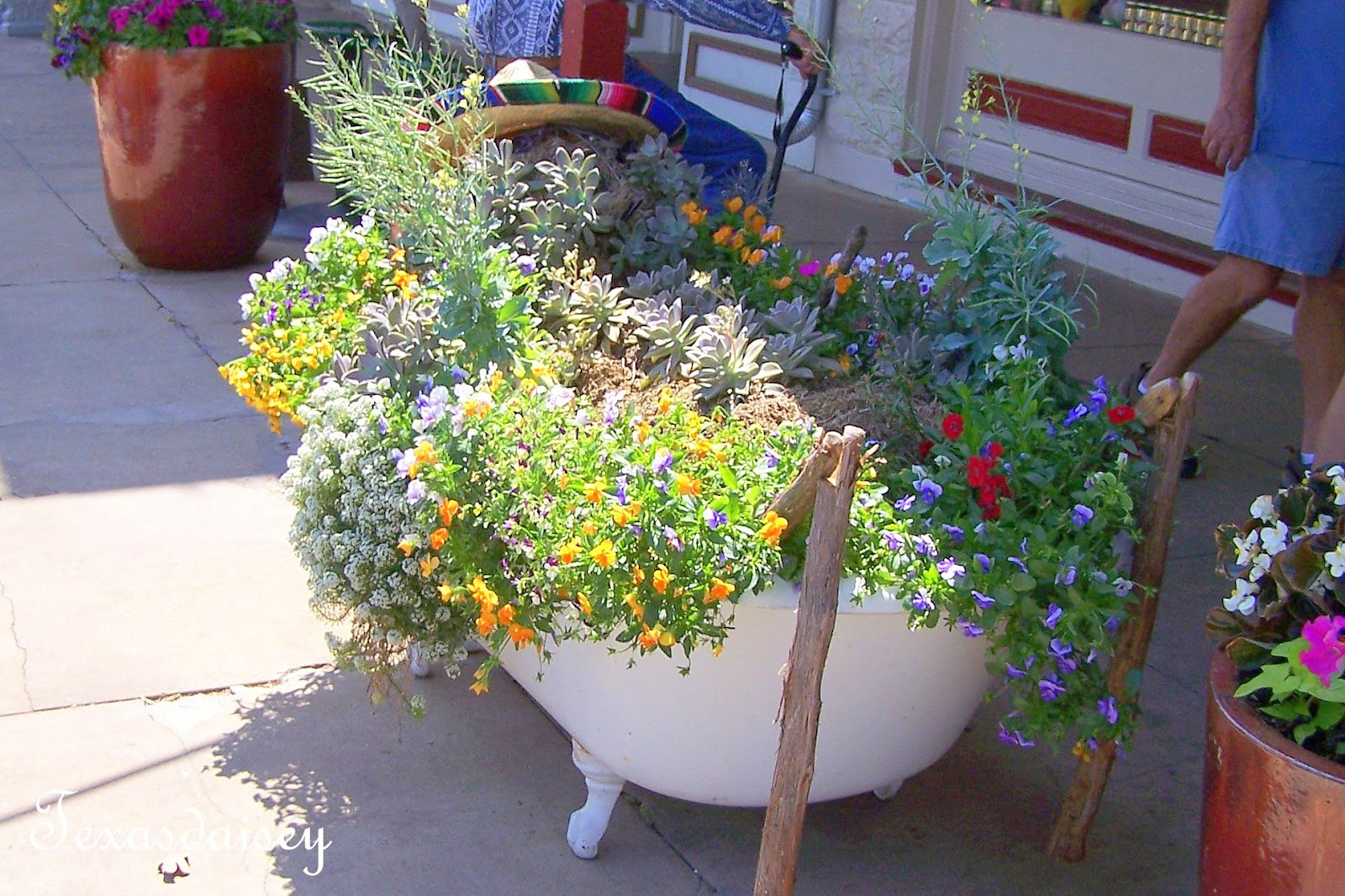 Texasdaisey creations container garden ideas for Container gardening