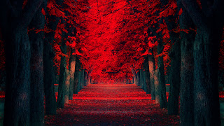 Red Leaves Covered Road Beautiful Autumn Landscape Wallpaper