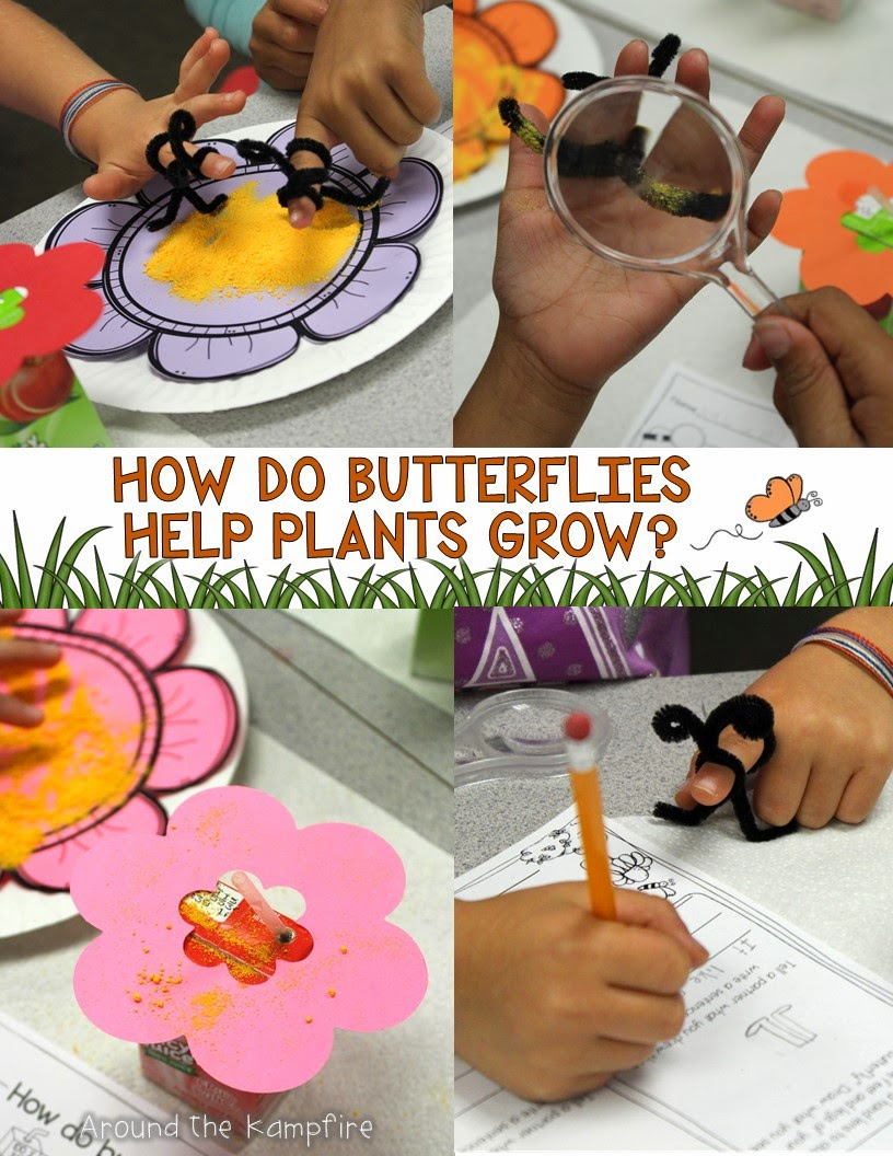 Butterfly life cycle pollination activities