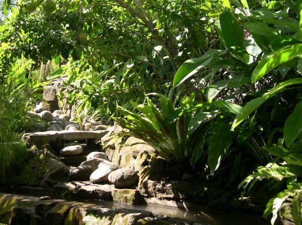 Tropical garden desi