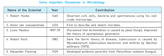 Essay on microorganisms