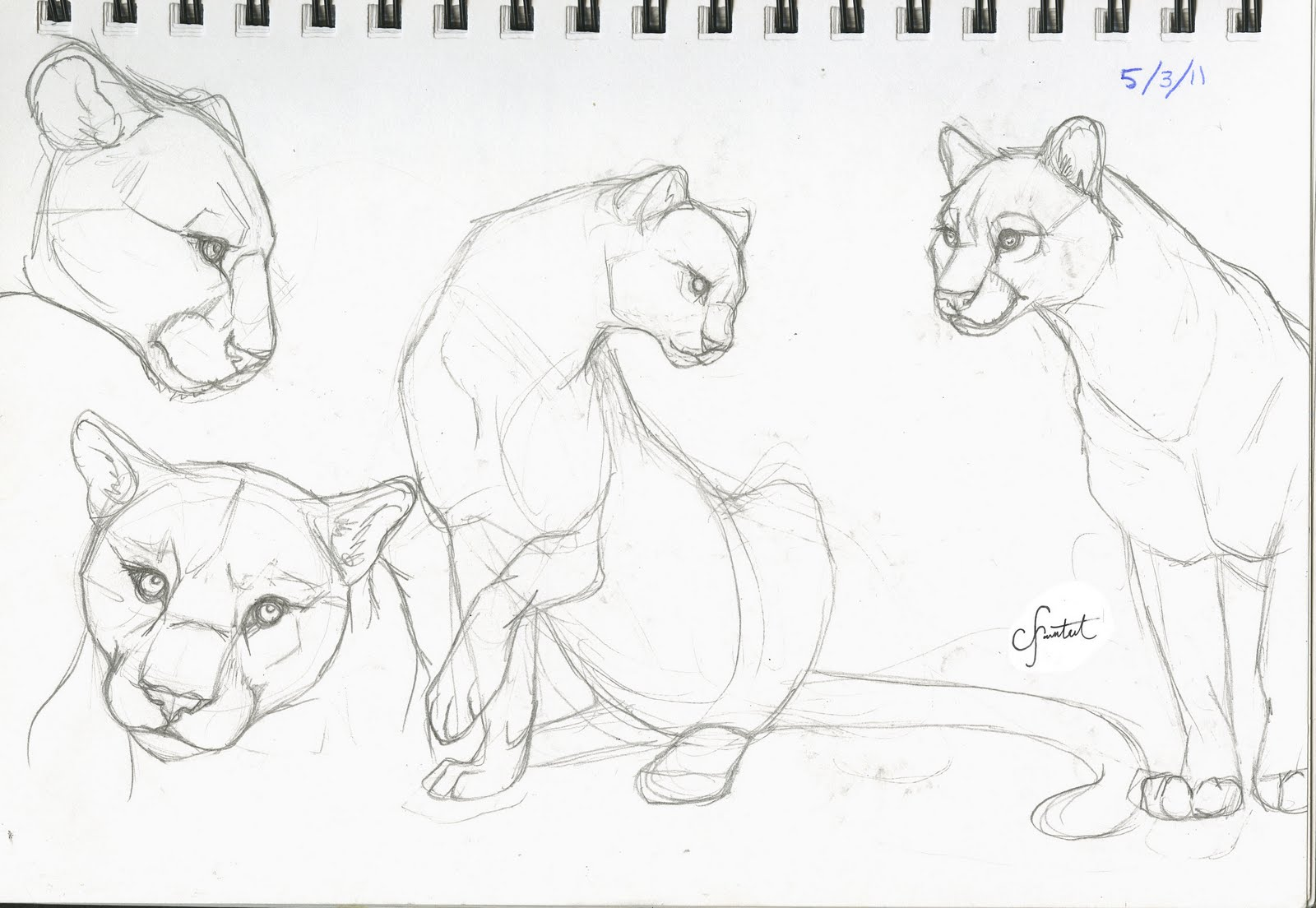 coloring pages mountain lion - photo#11