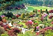 เทศกาลดอกเบญจมาศที่ The Garden of Morning Calm