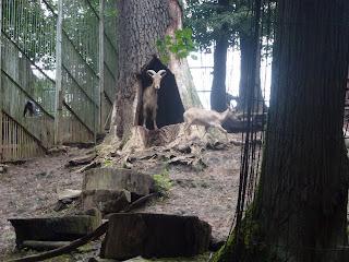 'De ontvangst in Kaunas Zoo was bijzonder hartelijk. Maar men begreep niet niet zo goed waarom zij een aantal jaren aspirant lid moesten zijn van de EAZA alvorens toegang te krijgen tot de club.