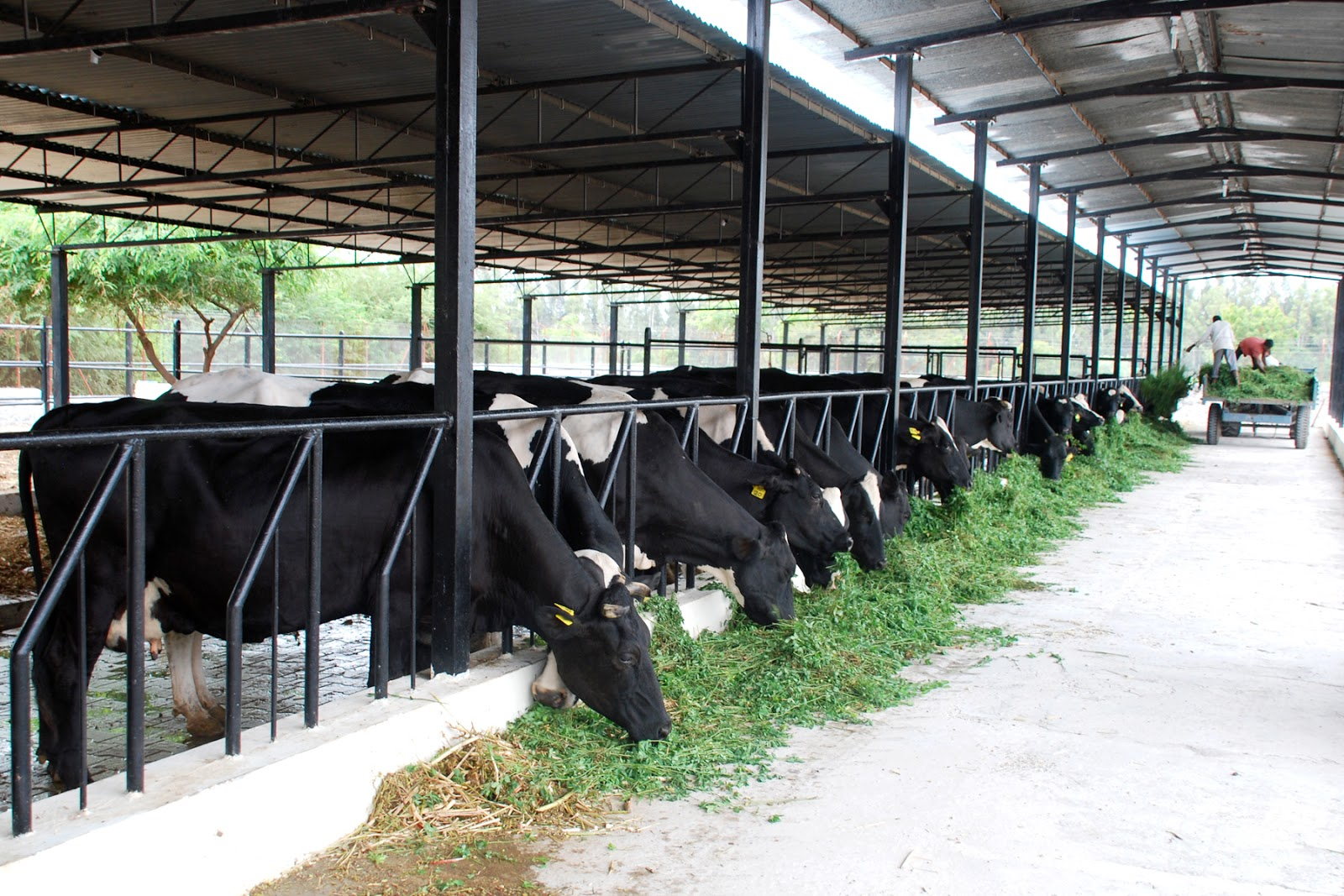 dairy farm equipment in india