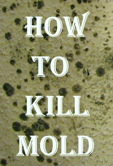 How to Kill Mold in Your House Or Office