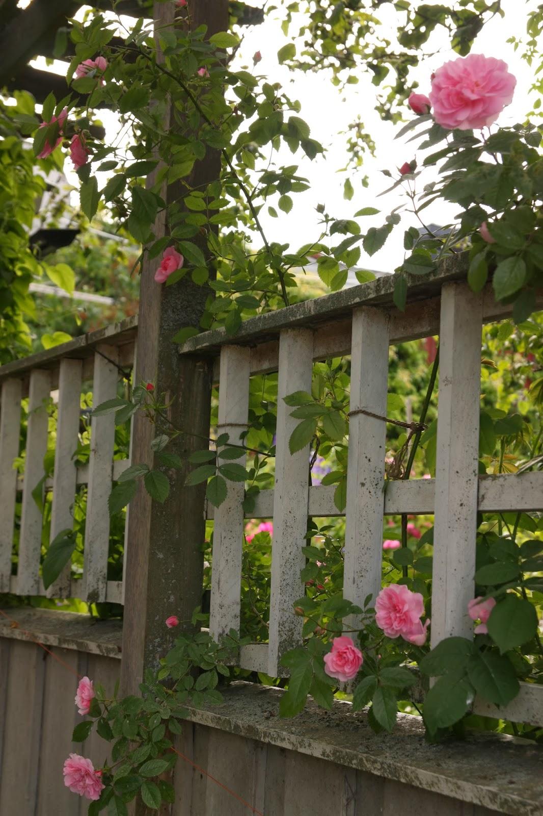 Trädgård plank trädgård : Kärleksstigen: Min hemlighet