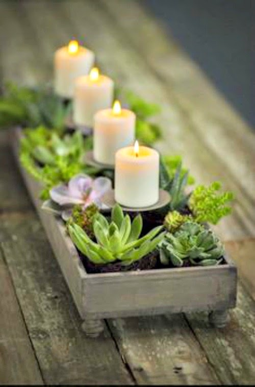 velas, decoração, suculentas