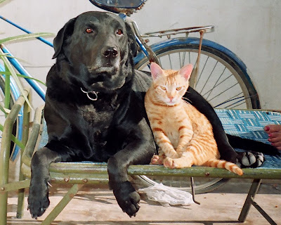 10. Friendship, Who says dogs & cats cannot be friends.