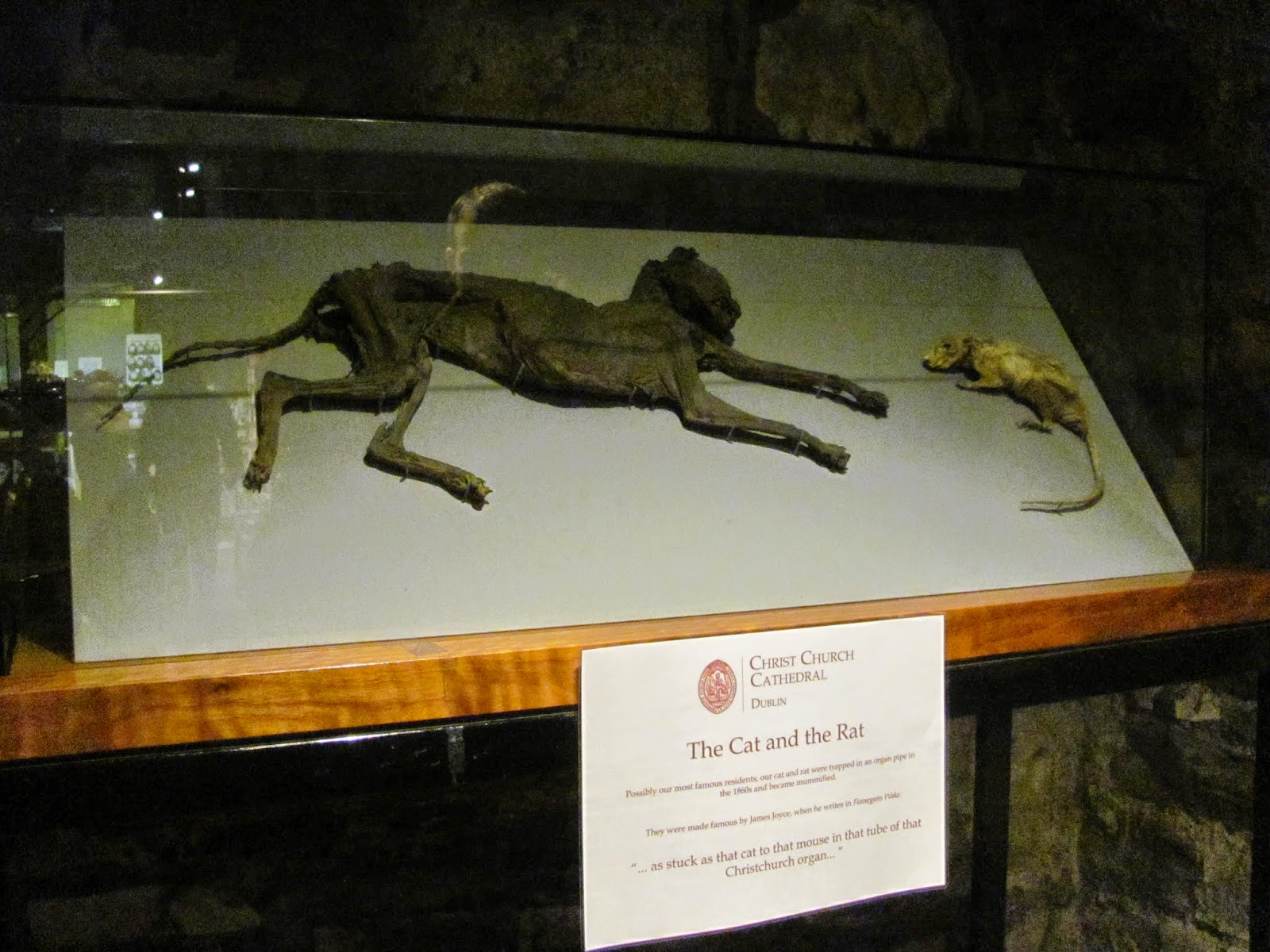 Mummified Cat and Rat—Christ Church Cathedral