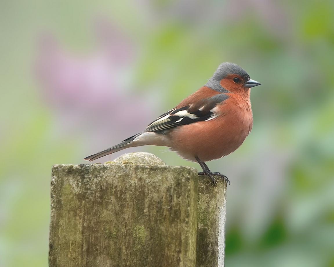 http://1.bp.blogspot.com/-l5JGek-ZT8c/T9cdtNEC_tI/AAAAAAAABDk/WpwmYoyF6kE/s1600/little-bird-on-tree-wallpapers_668_1152.jpg