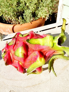 Ann Again and again - Is This Edible?  Dragon Fruit