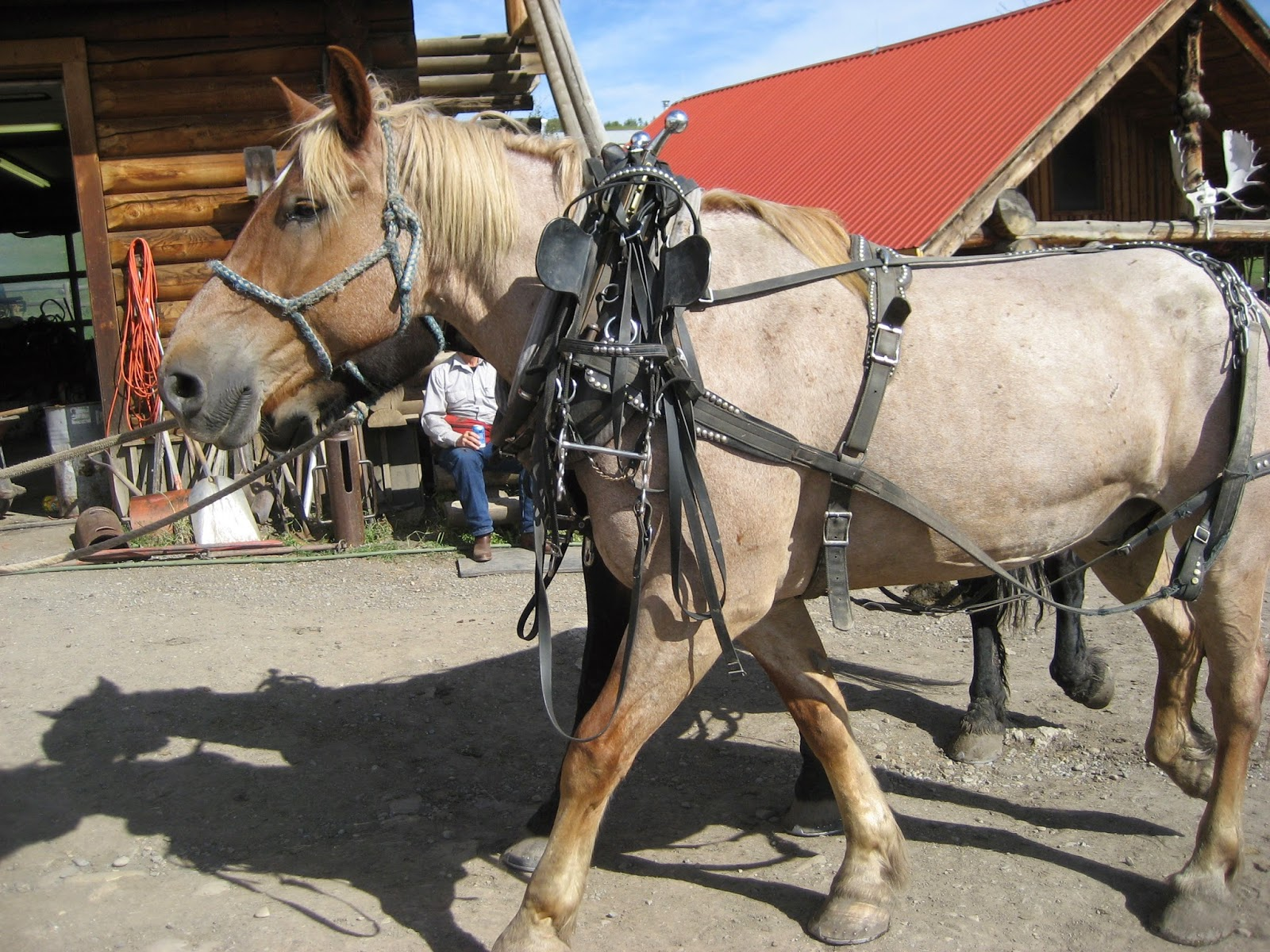 Do Horses Neigh When They Run?: What is hardware?