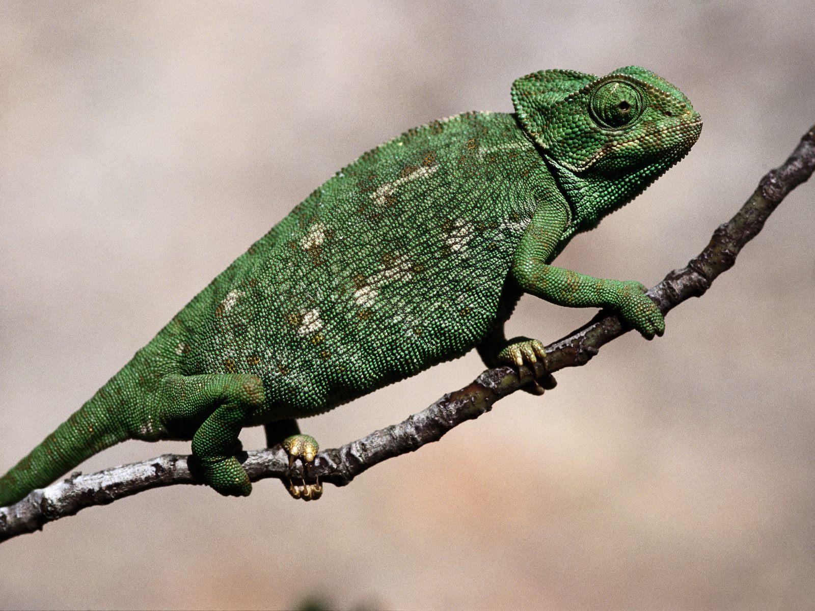 http://1.bp.blogspot.com/-l63NIEMEsUU/TxWNvxRRzOI/AAAAAAAADfE/2wrOnvm7L9U/s1600/26822_reptiles.jpg