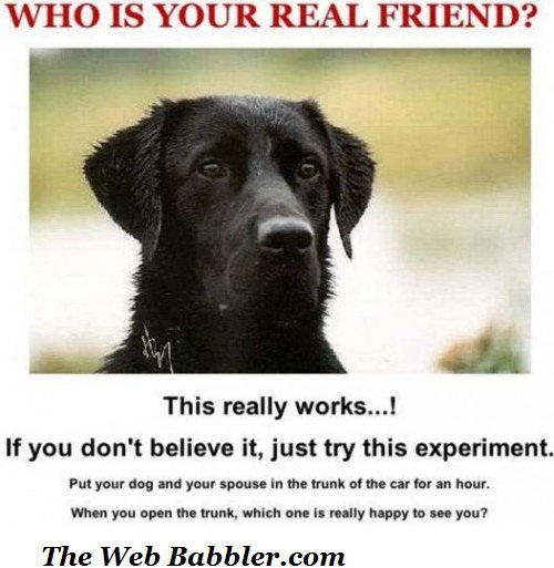 who_is_your_real_friend